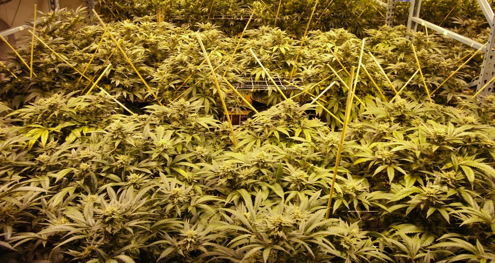 plantstore.jpg