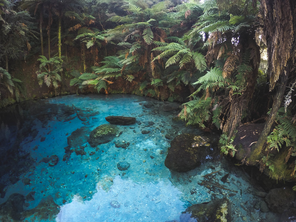 The bluest waters of Te Waihou Walkway, Blue Springs, North Island