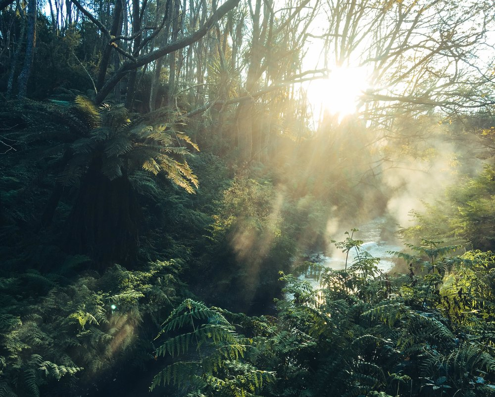 Natural hot springs in Rotorua, North Island