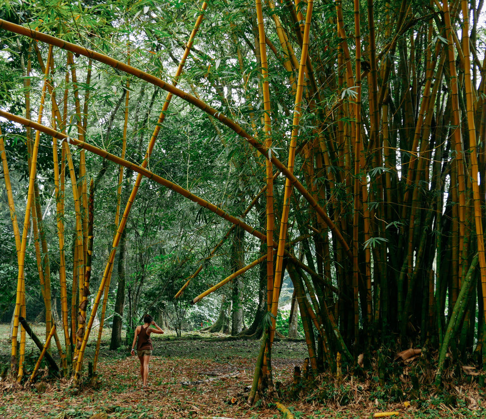 Walking through the bamboo