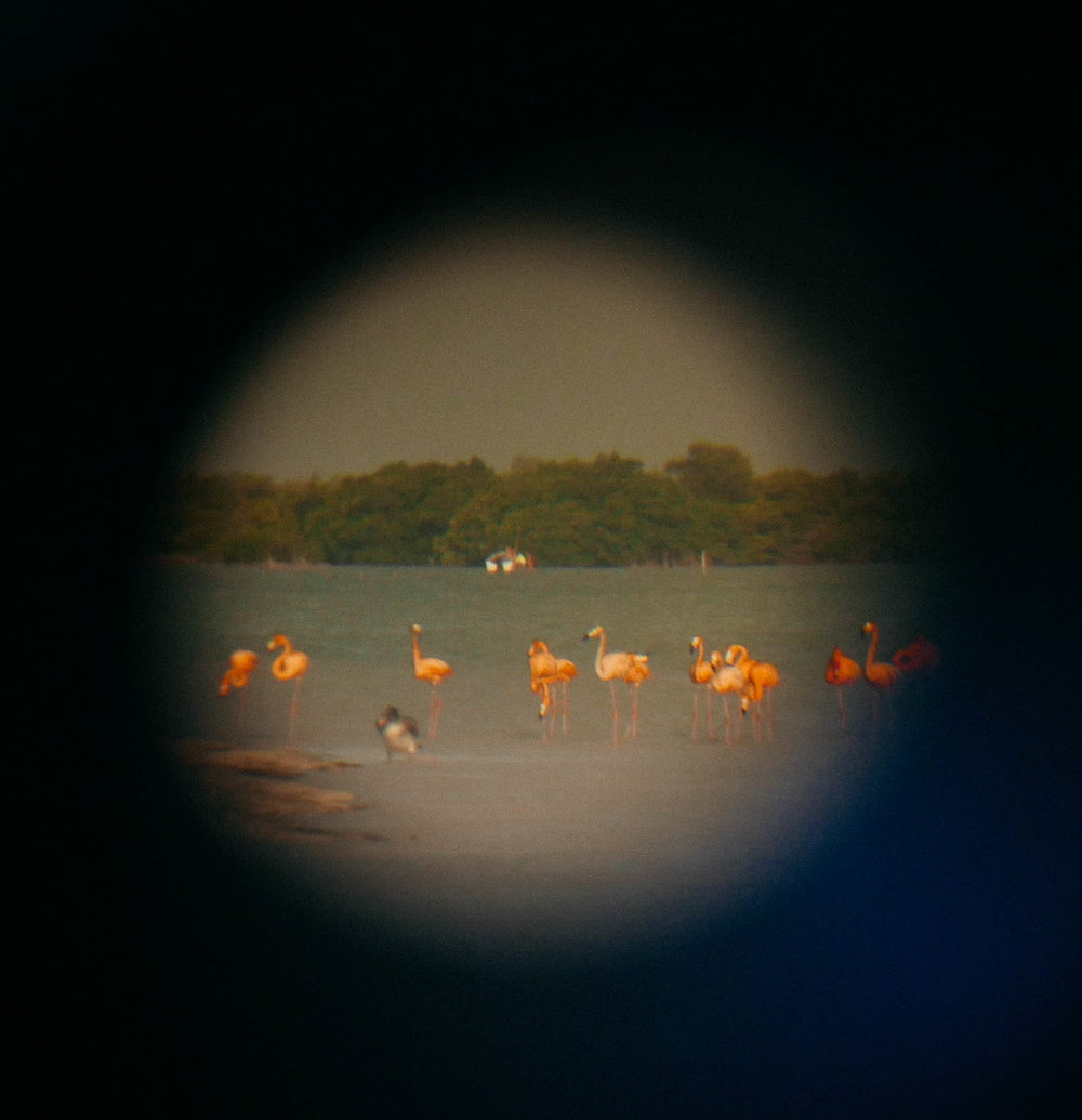 Binoculars are not only good for helping you see the flamingos but they double as a better zoom lens if your camera just doesn't cut it!