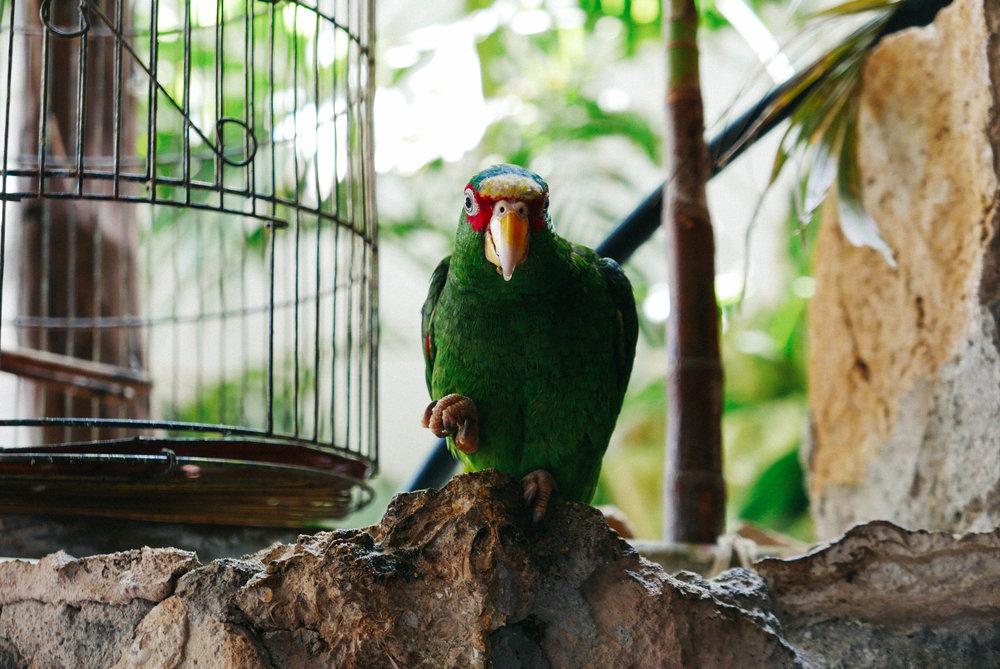 Boss bird at Macumba restaurant