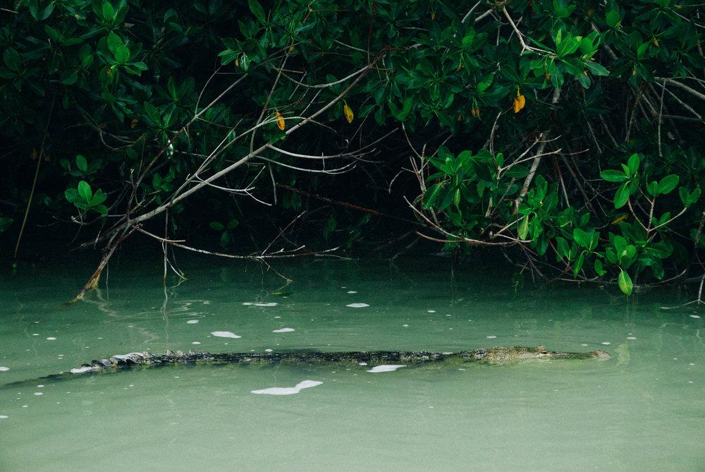 First crocodile spotting!