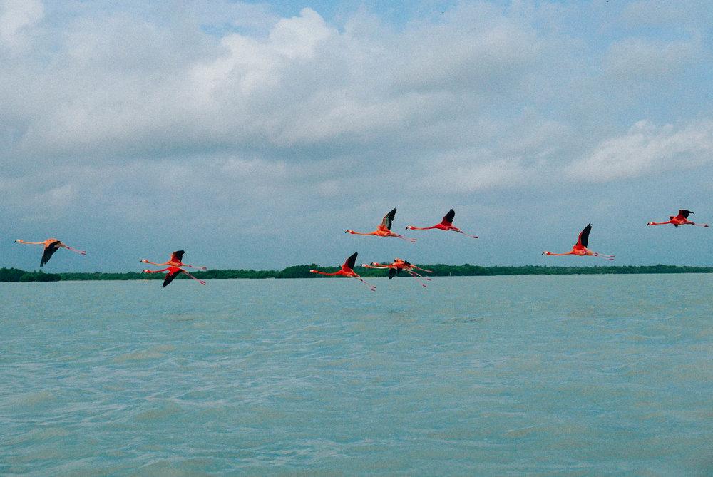 Away they go, the goofiest birds in flight.