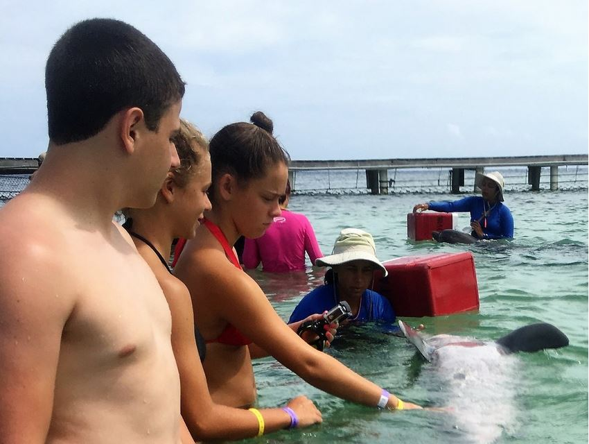 Beach Encounter - Scuba Education Experiences participants spend 30 minutes in waist-deep water with a dolphin trainer and a dolphin. We learn basic dolphin anatomy and behavior while giving the dolphin a rub down and enjoying jumps and vocalizations. Each person receives a dolphin kiss.