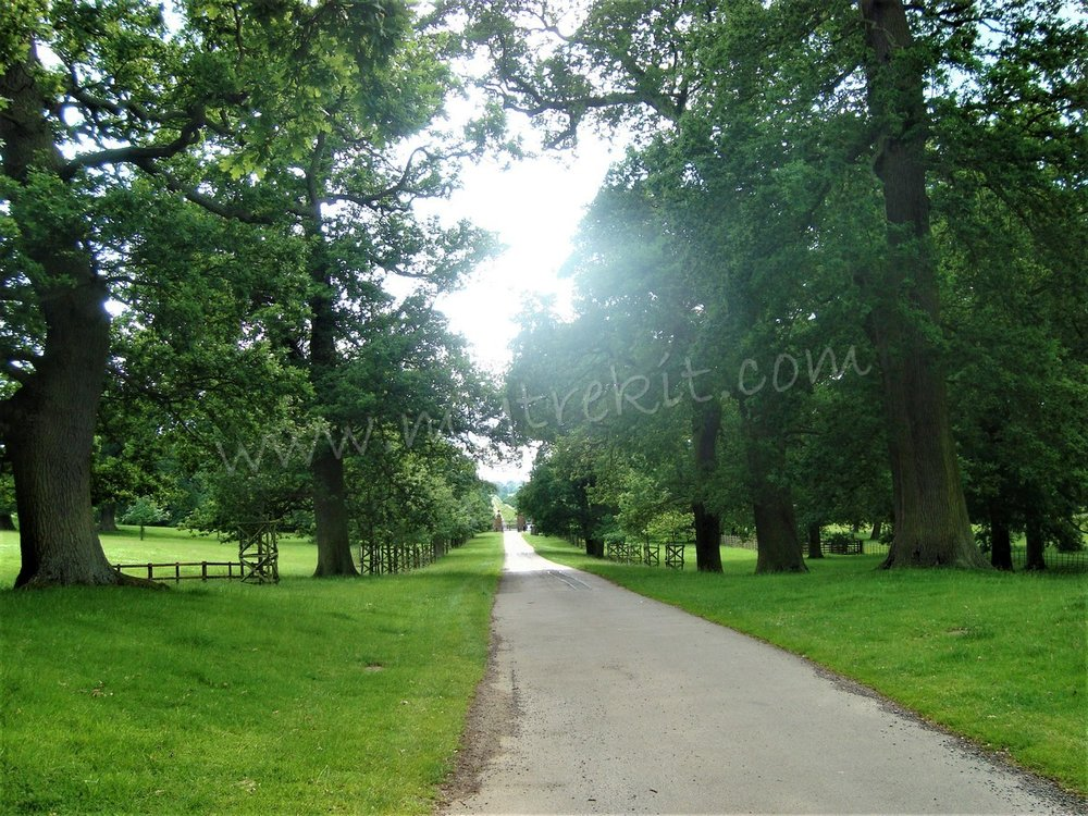 Althorop's Avenue (3).JPG