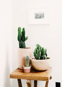 cacti+7.jpg