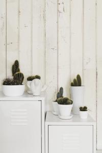 cacti+1.jpg