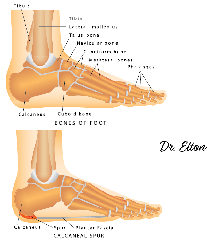 What Are The Ankle Bones And 10 Other Burning Foot And Ankle