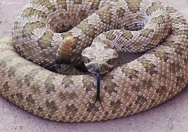 Rattlesnake season is here-- teach your toddler to sign SNAKE!