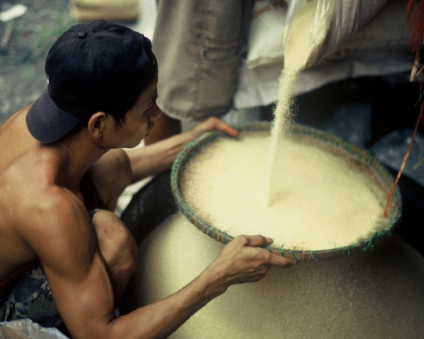 Sifting Rice in Vietnam