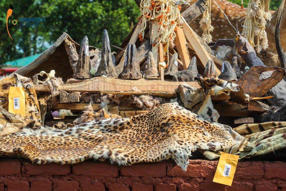 Poacher Pocessions.jpg