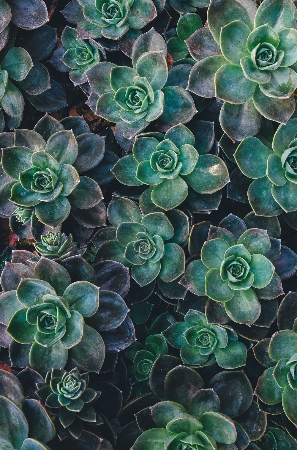 Kaitlin's Happy - Succulents