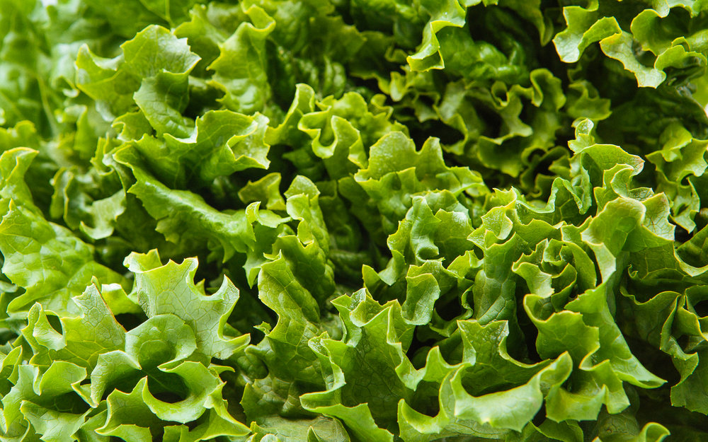Lettuce Foodshed Alliance 2017.jpg