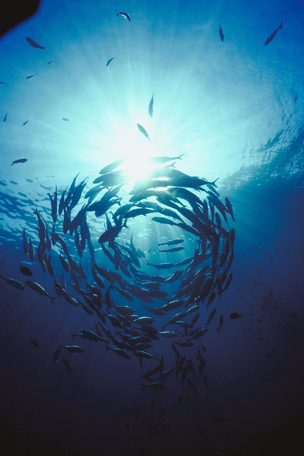 Moana Project opens 9 fully funded Ocean Sciences PhD