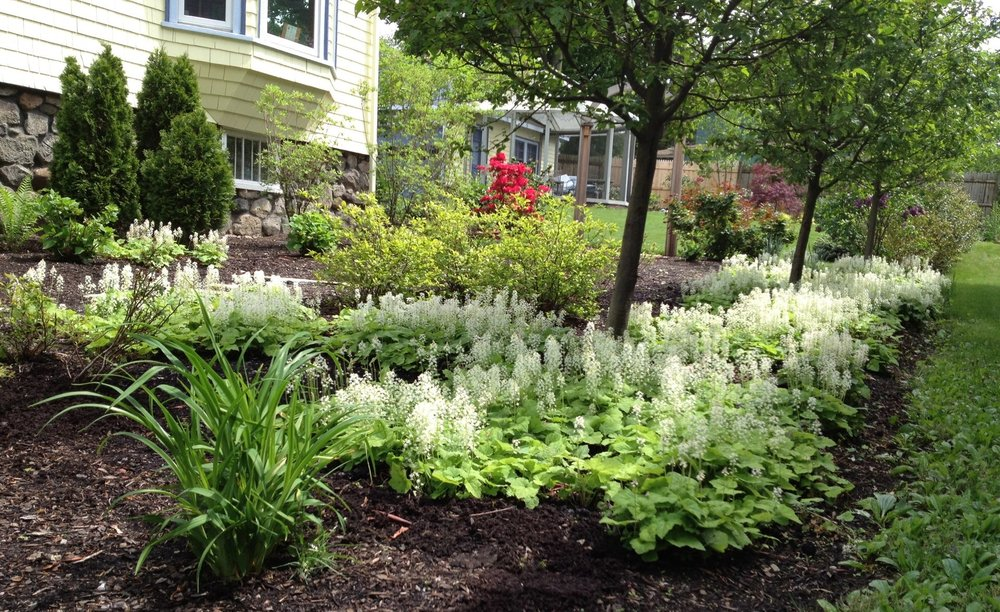 9 The side yard in spring, with the tiarella in bloom.jpg