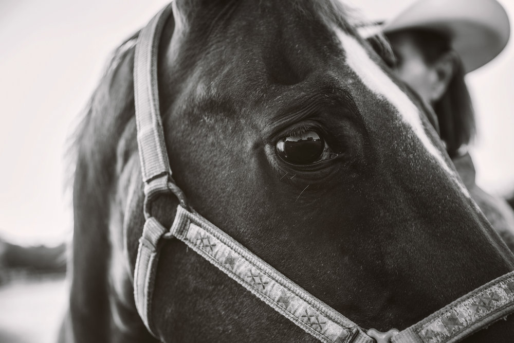 horse photographer in Nashville