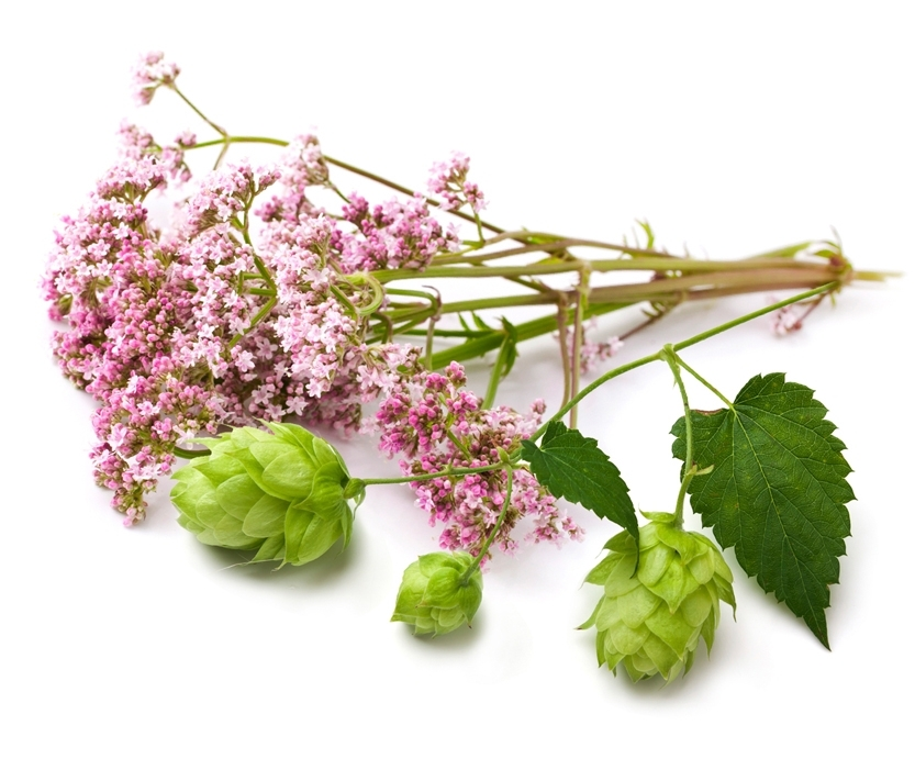 Valerian and Hops have a long history of helping with sleep issues and insomnia.