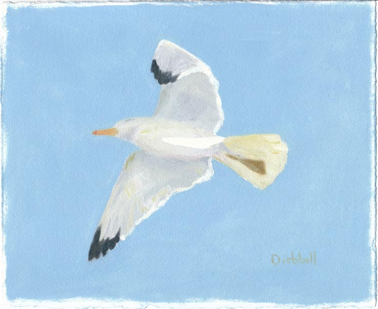 Gull, 8 x 10, oil on paper