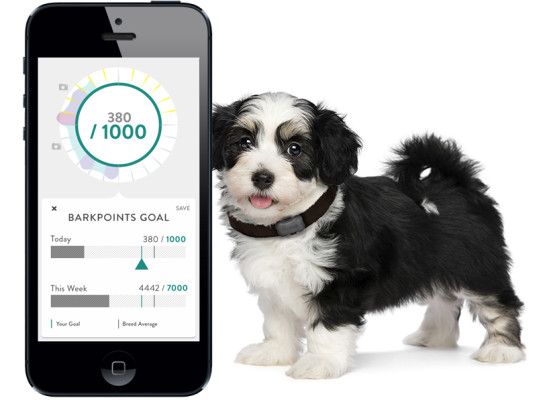 Wearable Technology for Pets