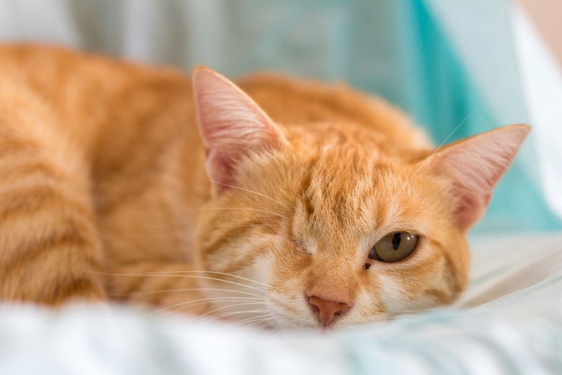 general+care+tips+for+dogs+and+cats+with+special+needs+_+orange+tabby+cat+with+one+eye-min.jpg
