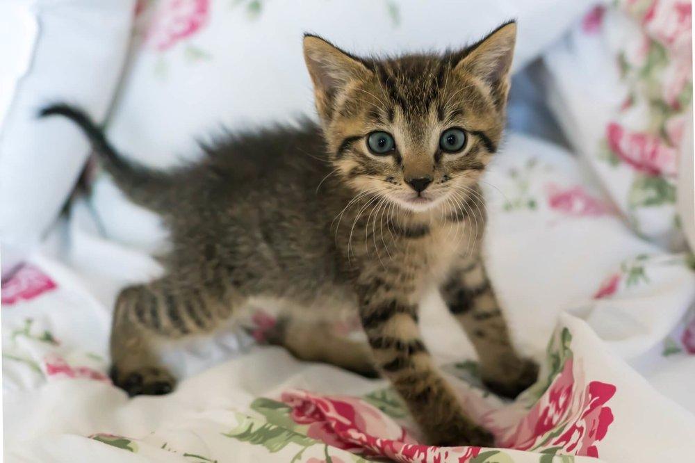 kitten+bath+time+tips+_+kitten+standing+on+a+rose-pattered+blanket.jpg