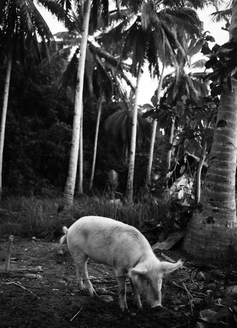 150110_philippines-1905.jpg