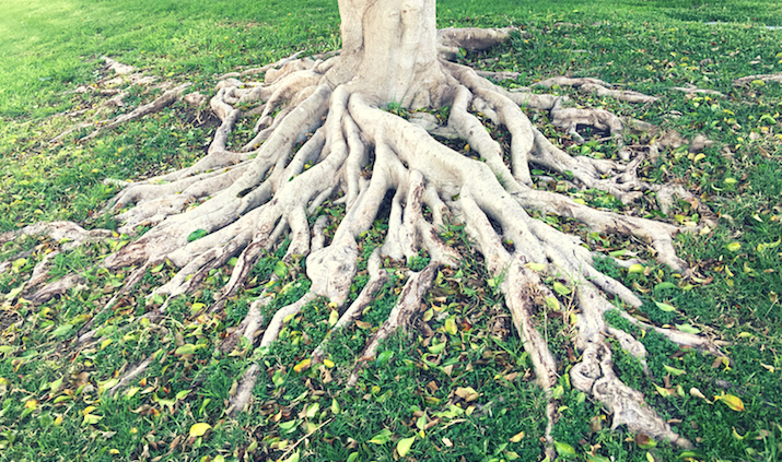 Tree roots (no border).png