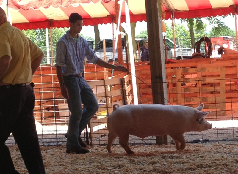 Derek showing Sir Piggy at the Kendall County Fairgrounds, Yorkville, IL