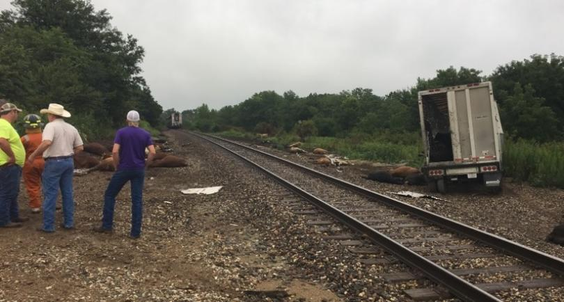 Cattle Truck Struck by Amtrak Train in Rural Kansas