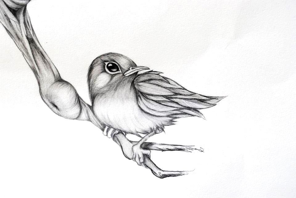 Ori Gallery Drawing 101