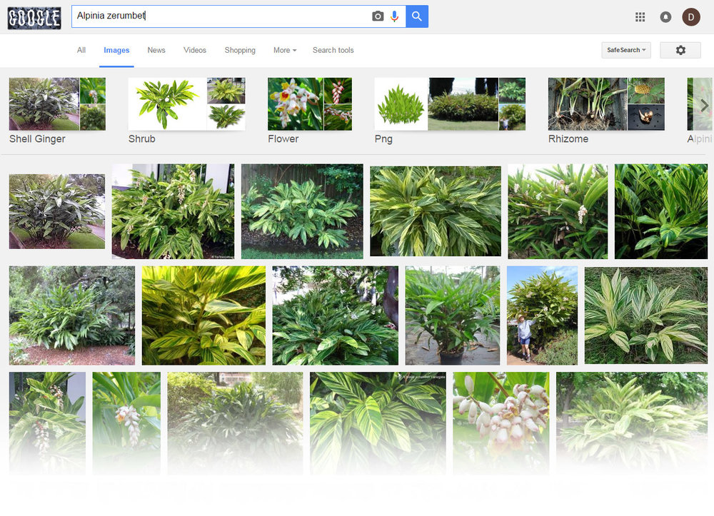 How to id some plants with google house plant journal for Garden plants names and pictures