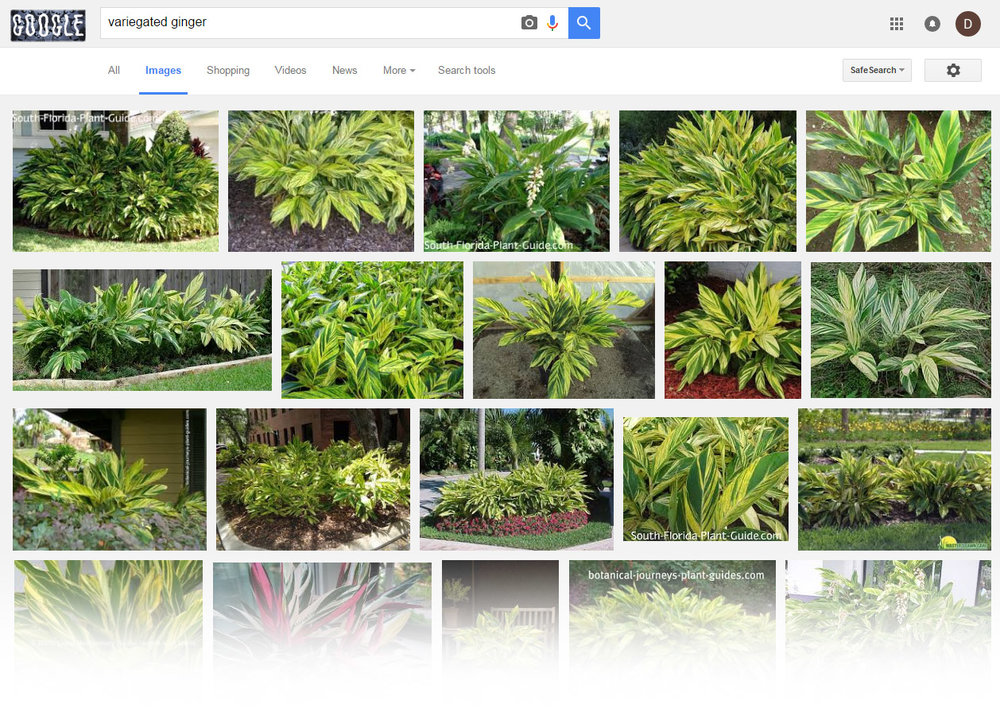 how to id some plants with google house plant journal