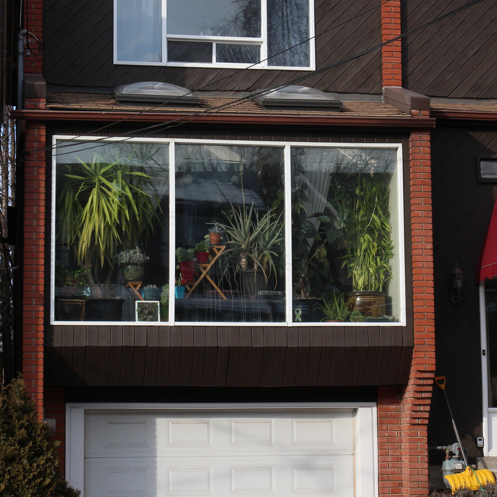 "Upon spotting this window, my first thought was: ""we should be best friends!""  Thanks to having friends in the neighbourhood, I had the opportunity to meet Elspeth and Blake.  Elspeth is the caretaker of these plants while Blake is gradually becoming a fan."