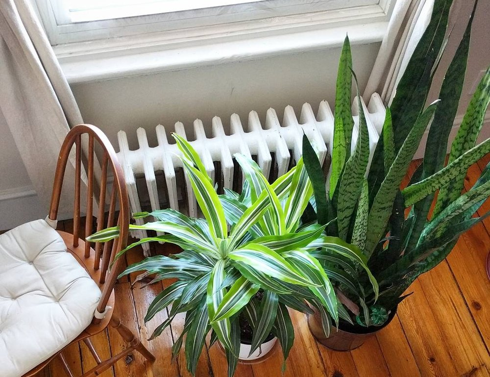 How Often Should I Water This Plant House Plant Journal