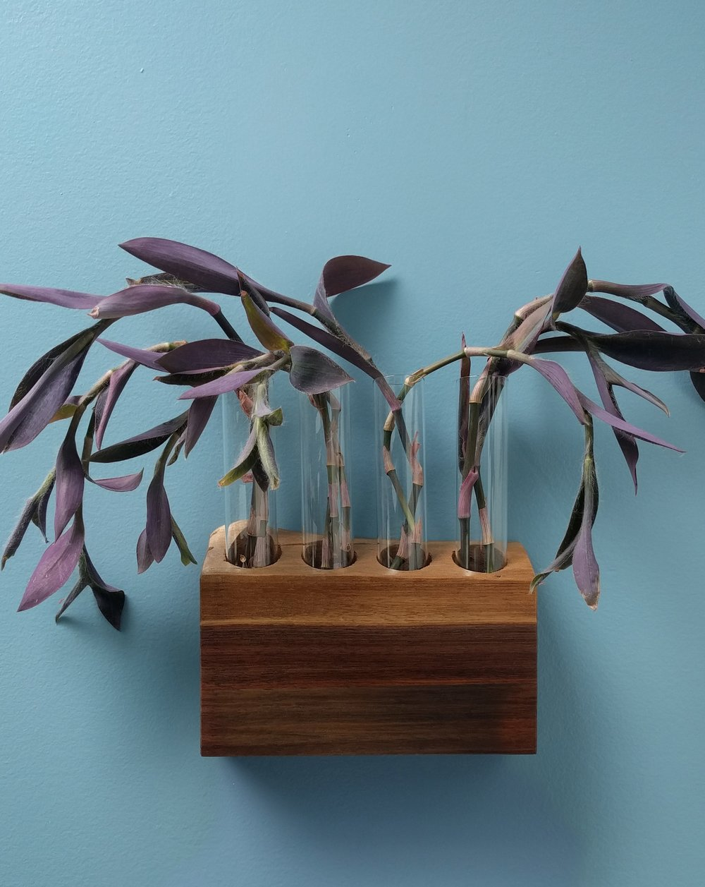 House plant identification tool - House Plant Journal Purple Heart Propagation