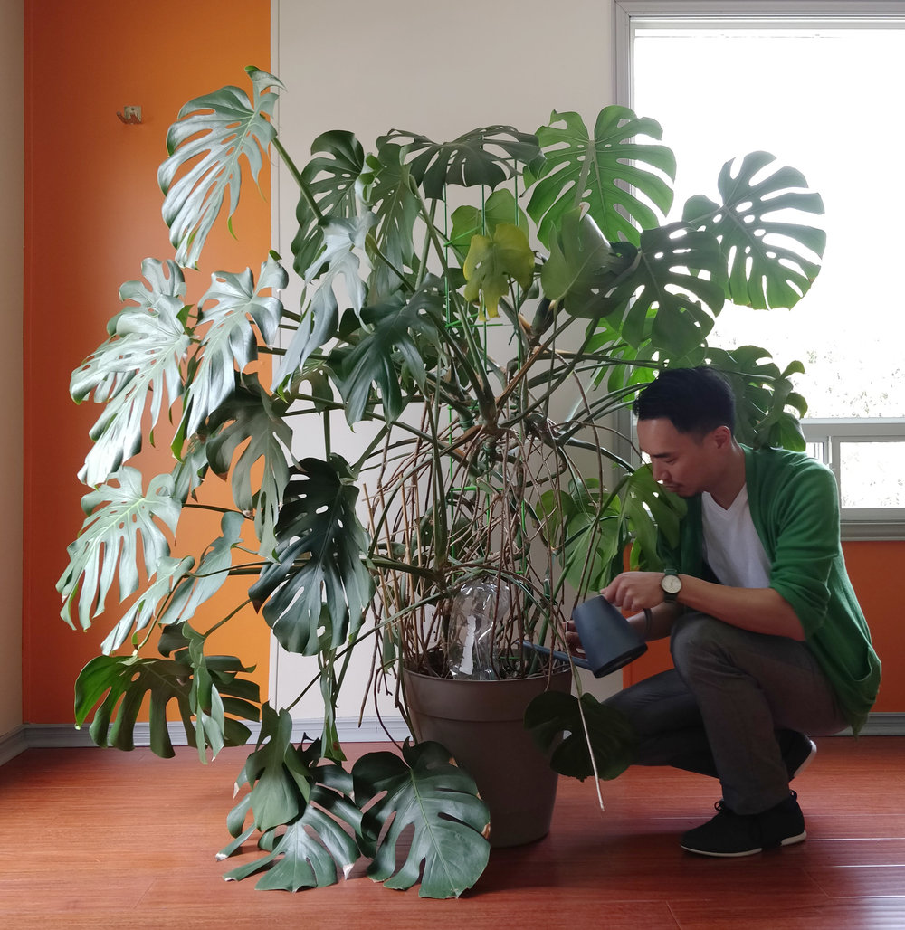 Discussion on this topic: How to Make a Philodendron Pole, how-to-make-a-philodendron-pole/