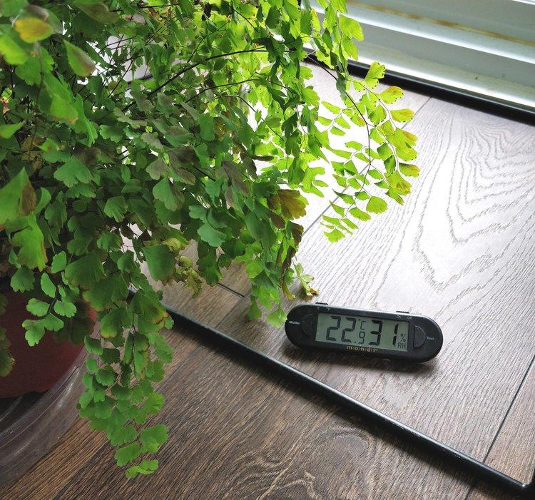 Trellis installation for Monstera deliciosa — House Plant Journal
