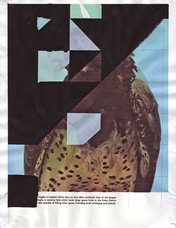 Martial Eagle 3, 2009  Gouache and pencil on inkjet print  11 x 8.5 inches  27.94 x 21.59 cm