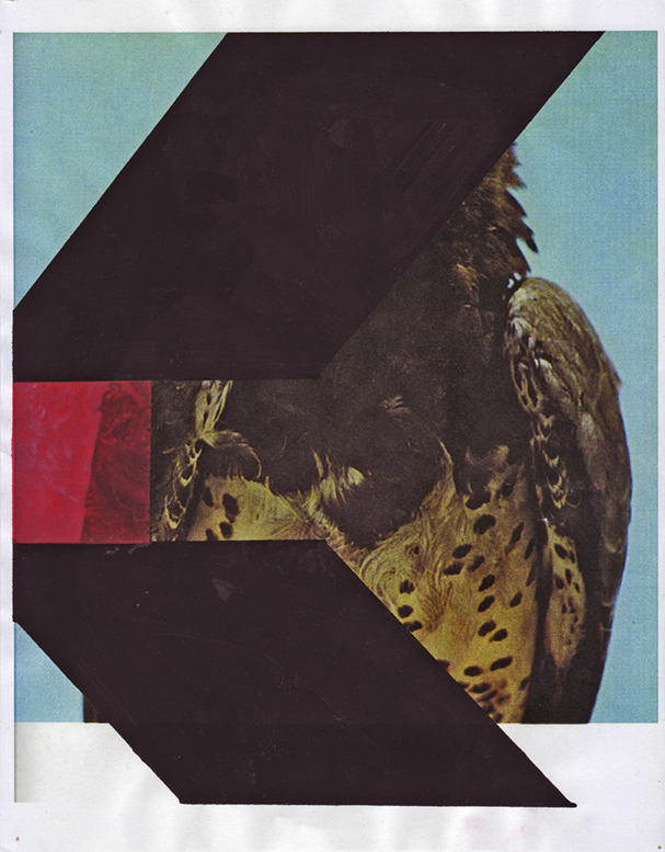 Martial Eagle 6, 2009  Gouache and pencil on inkjet print  11 x 8.5 inches  27.94 x 21.59 cm