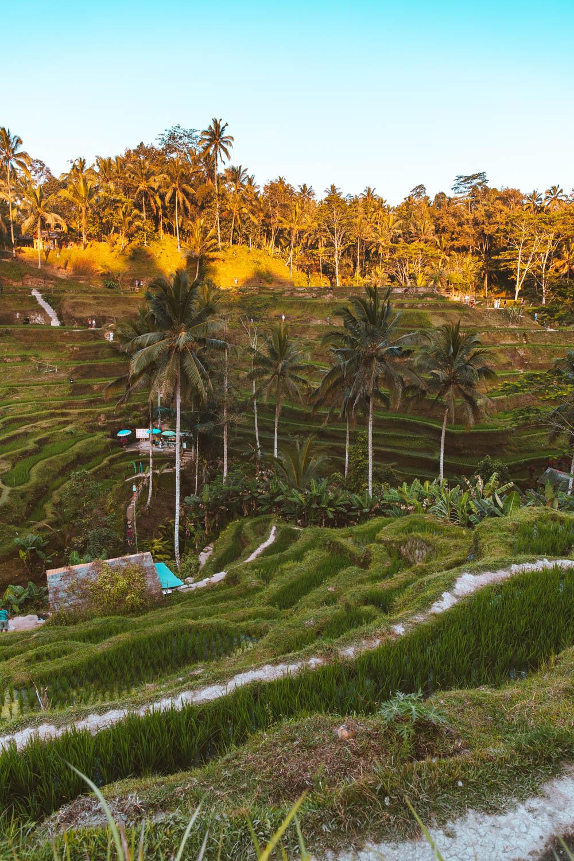Bali2-2726.jpg