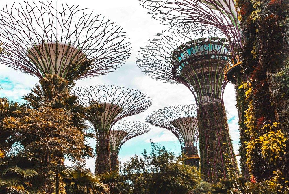 Singapore-5598.jpg