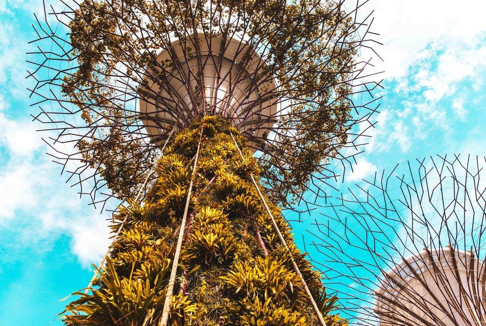 Singapore-5600.jpg