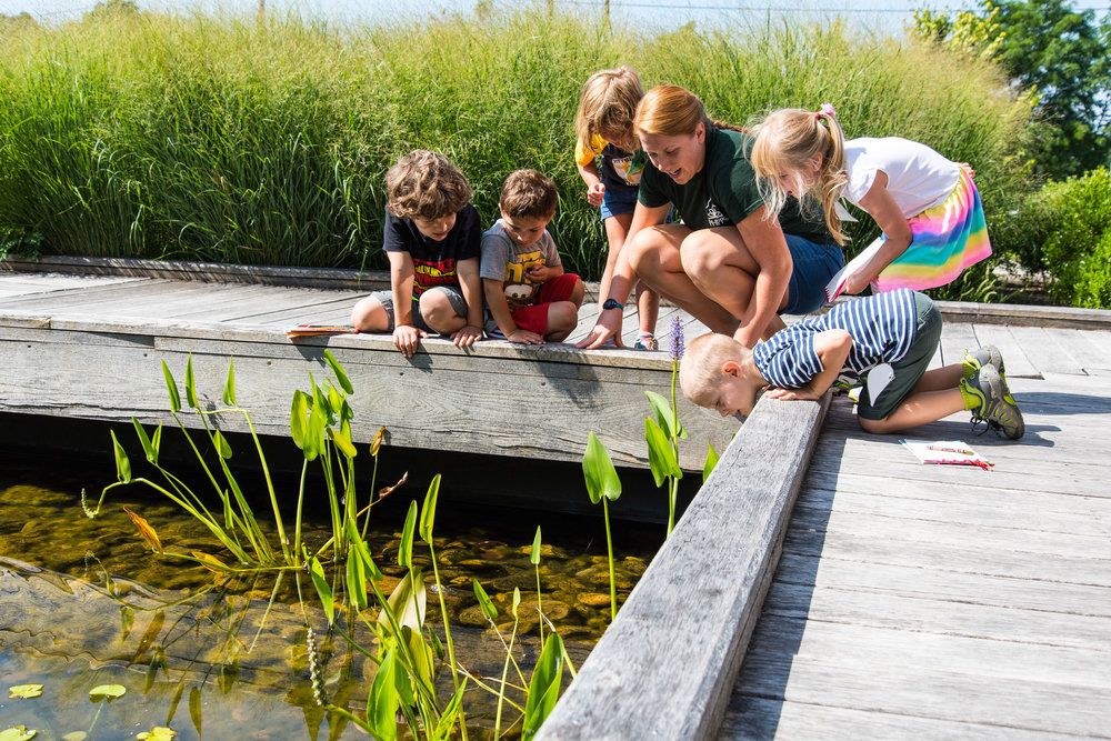 Young guests learn about native wildlife at Phipps' center for sustainable landscapes, photo by Paul g. wiegman