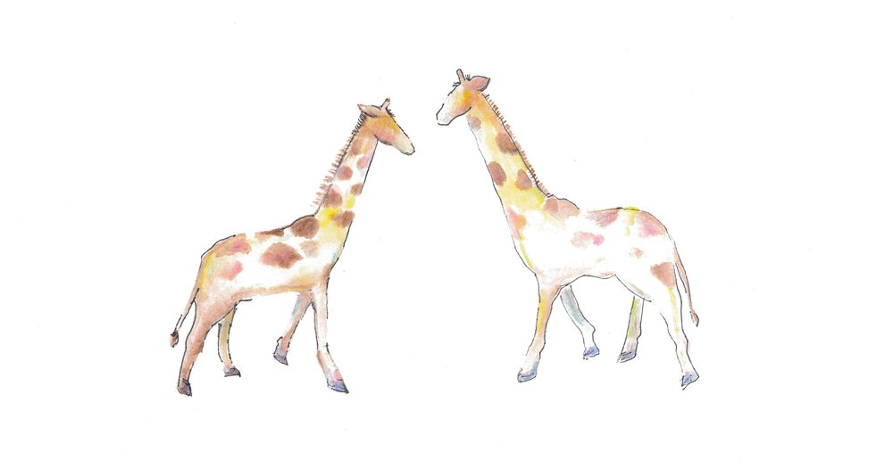 watercolourgiraffes