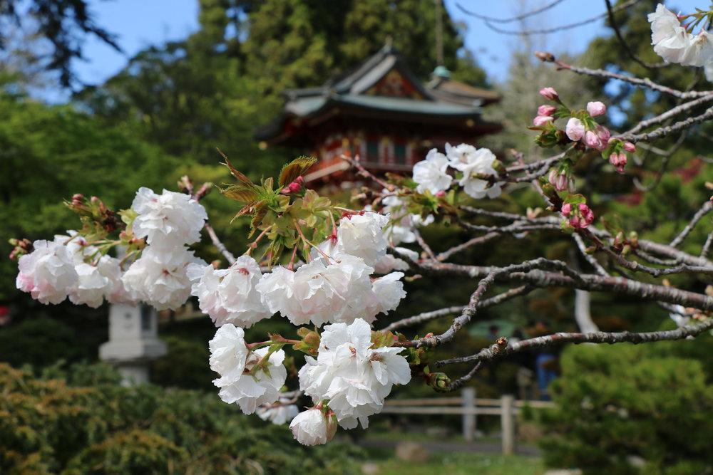 Japanese Garden_14923179798_l.jpg