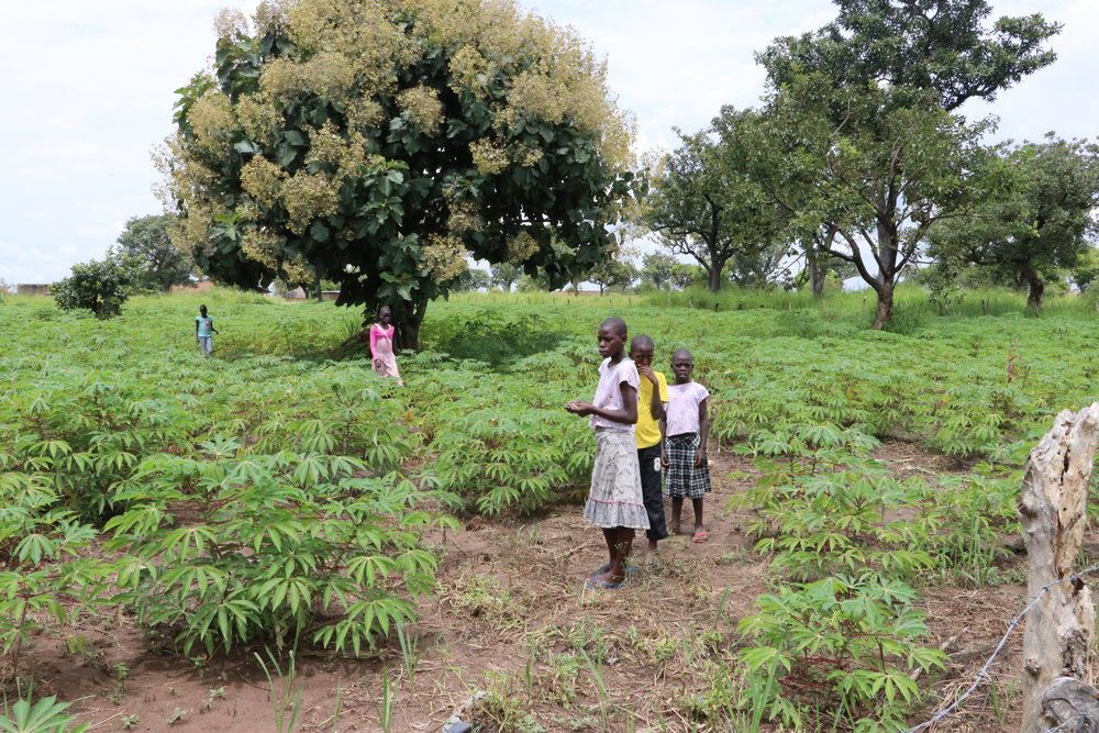Girls in the growing Cassava in August 2018