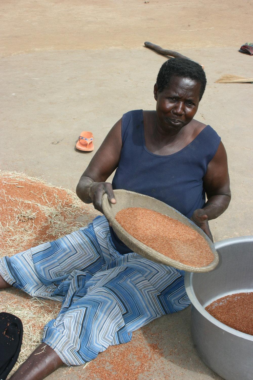 Sifting Millet