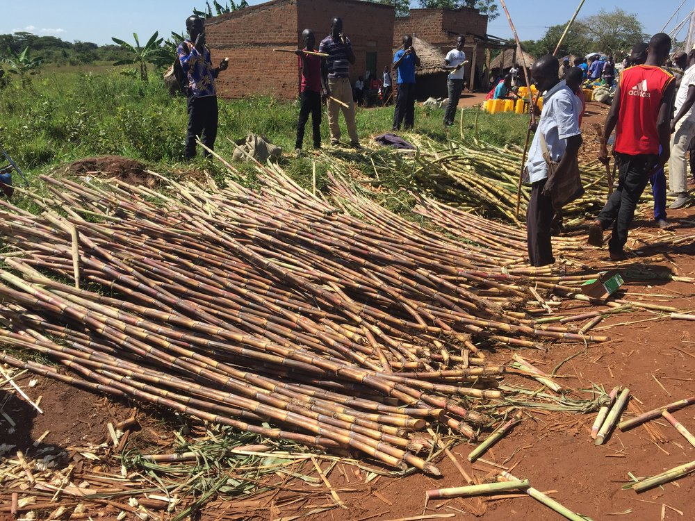 Sugar Cane for sale in the market