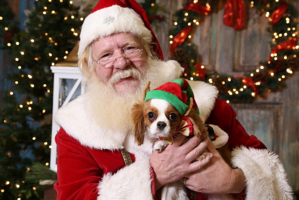 Santa Paws 2016 -